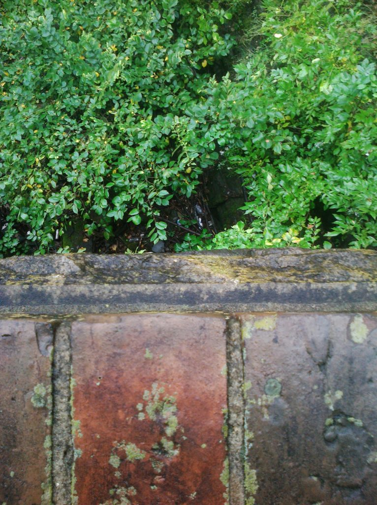 Brick wall and shrubs photo