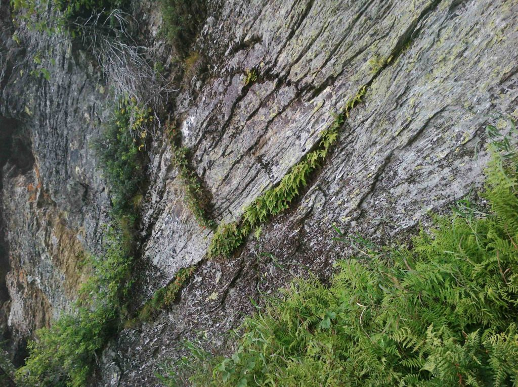 Cliff with ferns photo